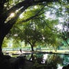 Foto Taman Bunga Wiladatika,