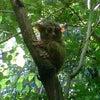 Foto Taman marga satwa Tandurusa, Bitung Tengah