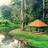 Foto Penang Botanic Gardens 植物園, Georgetown