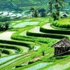 Foto Jatiluwih Rice Field, Tabanan