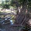 Foto Muara kayu doyong, Baharu