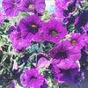 Фото Оранжерея
