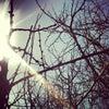 Фото Севан