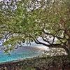 Photo of Lodge Kura Hulanda & Beach Club