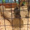 Фото Трогательный зоопарк