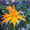 Фото Наш сад