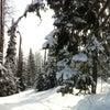Фото Гора Туманная
