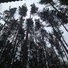 Фото ИНКОМ-СОСНЫ