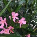 jelle-hoogenboom-15570885