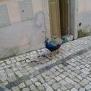 fabio-costa-3580643