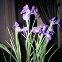 petra-kerkhove-3778896