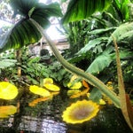 Photo taken at Garfield Park Conservatory by GIMME D. on 12/5/2012