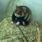 Фото Зоопарк ТГУ им. Г. Р. Державина в соцсетях