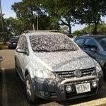 No dejen su carro debajo de los arboles por mucho tiempo!!