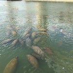 Photo taken at Manatee Viewing Center by Flávia P. on 1/30/2015