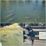 Photo taken at Manatee Viewing Center by Paula M. on 2/19/2015