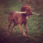 Happy Dogz Daycare