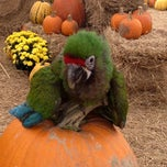 Photo taken at Pumpkin Patch @ The Markets at St Johns Town Center by EastCoast L. on 10/14/2012