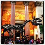 Photo taken at American Museum of Natural History by Tim W. on 5/18/2013