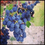Photo taken at Vigna Villalta by Gianluca M. on 9/23/2013