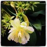 Photo taken at Succulent Garden by Caestus on 2/28/2014