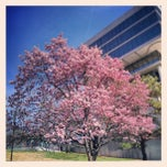Photo taken at City-County Building by Arthur C. on 3/16/2013