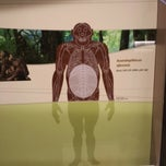 Photo taken at David H. Koch Hall of Human Origins by Alexey S. on 9/2/2013