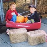 Photo taken at Alma's Garden Center by Patrick D. on 10/25/2014