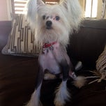 Photo taken at Yuppies Puppies Pet Grooming by Bobbi B. on 10/9/2013