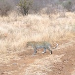Photo taken at Olifants Rest Camp by Elise B. on 11/5/2014