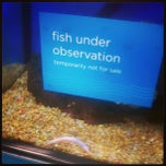 Photo taken at Petco by Jason B. on 5/16/2013