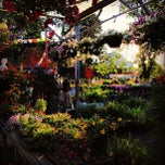 Photo taken at Pablos Garden Center by Xuan C. on 6/22/2013