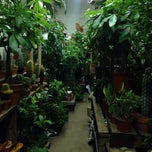 Photo taken at Flower District by Viv on 11/14/2013