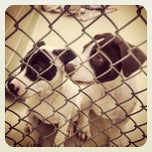 Photo taken at Frederick County Animal Shelter by John B. on 9/14/2013