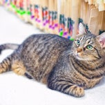 Photo taken at North Seattle Veterinary Clinic by North Seattle Veterinary Clinic on 3/4/2014