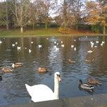 Photo taken at Abington Park Lake by Lord Tony on 11/18/2014