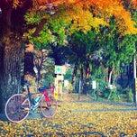 Photo taken at 松戸中央公園 by Atsushi I. on 11/30/2014