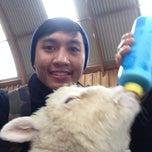 Photo taken at Sheep World by Aizat A. on 9/1/2014