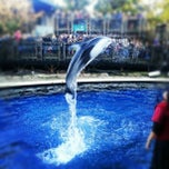 Photo taken at Vancouver Aquarium by Kaishin C. on 11/24/2012