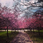 Photo taken at Ravenscourt Park by Ludovic D. on 4/14/2013