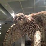 Photo taken at Naturmuseum St. Gallen by Marcel A. V. on 3/3/2013