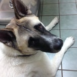 Photo taken at Southkent Veterinary Hospital by MB M. on 6/19/2014