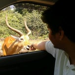 Photo taken at Taman Safari Indonesia II by Septiansyah A. on 7/24/2012