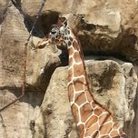 Photo taken at Philadelphia Zoo by Jamie H. on 4/13/2013