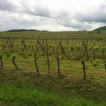 Photo taken at Pfaffenheim Vineyards by Dace B. on 5/13/2014