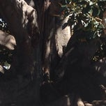 Photo taken at Moreton Bay Fig Tree by Tawmis L. on 3/16/2014