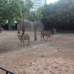 Photo taken at Okapi Exhibit by Aleksandra G. on 5/8/2014