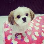 Photo taken at Asean Puppy by Chyiien QiEn on 3/21/2014