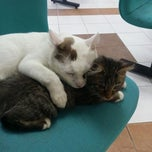 Photo taken at Hospital Veterinar Kuala Lumpur by Maizura R. on 2/25/2015