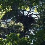 Photo taken at Pickerel lake by Chris F. on 7/28/2012
